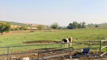 Bağtepe Mahallesi'nde Kiralık Çiftliik