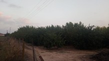 Kayhan'da 35 Dönüm Satılık Bahçe