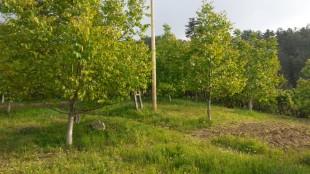 Feke Çataloluk'da Satılık Bahçe